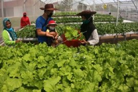 Penuhi kebutuhan sayuran di masa pandemi dengan sistem hydroponik