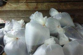 Pelaku usaha pembenihan ikan di Jambi perluas pemasaran selama pandemi