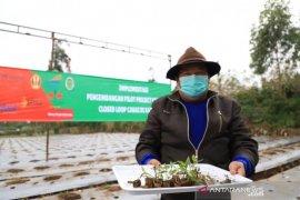 """Pupuk Kujang kembangkan """"closed loop"""" petani cabai di Garut untuk jaga ketahanan pangan"""