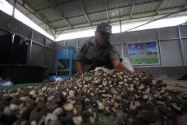 Dinas Kehutanan Kalsel kembangkan penanaman hasil hutan bukan kayu