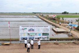 """""""Food Estate"""", belajar dari proyek lahan sejuta hektare"""