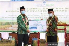 Dukung Sektor Pertanian, Bank Kalsel Sinergi Dengan Petani