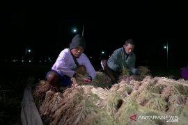 """Bantu petani tingkatkan produksi bawang, PLN Pasuruan kembangkan """"electrifying agriculture"""""""