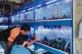 ikan cupang jadi hobi baru masyarakat saat pandemi COVID-19
