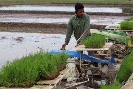 FAO ingatkan 132 juta orang menderita kelaparan sampai akhir tahun