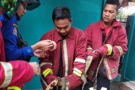 Damkar Kota Jambi tangani 77 kasus non kebakaran