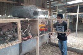 Terinspirasi dari internet, Sutrisno kembangkan ternak puyuh petelur