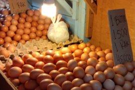 Harga telur ayam ras di pasar tradisional Ambon turun