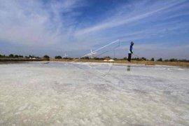 Produksi garam rakyat Cirebon turun drastis
