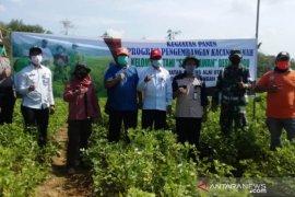 Video - DPRD HST puji keberhasilan pengembangan kacang tanah Poktan Setia Kawan