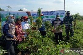 Staf Ahli Bupati HST hadiri syukuran panen kacang tanah