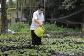 Pemkot Tangerang libatkan pegawai sejumlah OPD bantu pembibitan tanaman produktif