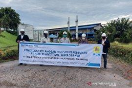 Program BESTARI-Riau2020 cara PLN Pekanbaru bantu pelaku usaha sektor pertanian