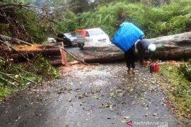 Badai tumbangkan pohon di lintas Nagan Raya-Aceh Tengah