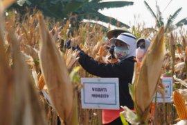 Hari Pangan Sedunia, Ning Ita ajak warga manfaatkan lahan