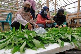Krisis pangan, KRKP tekankan pentingnya peran perempuan tani