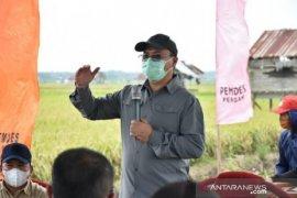 """Bangka Belitung jadikan sentra padi Bangka Selatan sebagai """"food estate"""""""