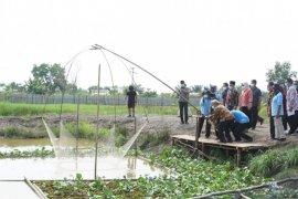 Pemanfaatan rawa banjiran bisa berperan optimal untuk tingkatkan ketahanan pangan