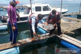 Pembudidaya ikan keramba di Situbondo peroleh bantuan bibit lobster