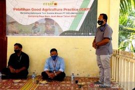 Mifa Bersaudara latih petani Aceh Barat melalui sekolah lapangan