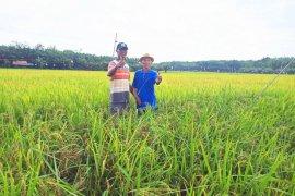 Warga Pulaulaut Timur harap pembangunan irigasi