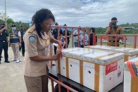 KKP dukung ekspor perdana kepiting bakau hidup dari Papua ke Singapura