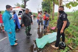 Satu orang tewas akibat pohon tumbang