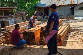 Gakkum KLHK tangkap pemilik penggergajian ilegal di Kabupaten Kayong Utara