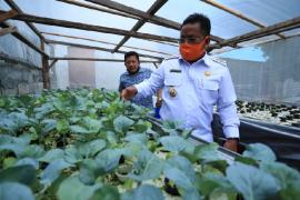 Wali Kota Banda Aceh ajak warga budi daya tanaman hidroponik