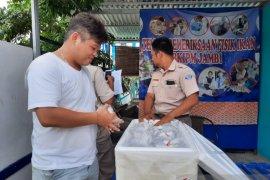 BKIPM Jambi sebut pengirimanan ikan hias meningkat