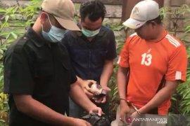 Satpam dan penjaga rumah ibadah di Bengkulu ditangkap polisi karena miliki ganja