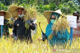 Produksi padi di Nagan Raya capai 6,5 ton per hektare di 2020