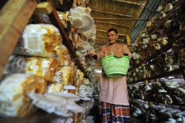 Penjualan jamur tiram organik