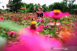 Wisata Taman Bunga Celosia Page 1 Small