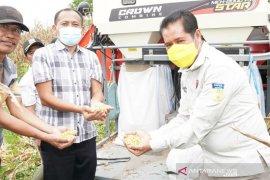 Pemkab Keerom apresiasi panen perdana jagung kering tembus pasar Jatim