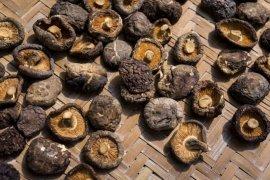 Manfaat jamur shiitake, tingkatkan kekebalan tubuh hingga cegah kanker