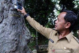 Pohon penghijauan di Kota Bogor mliki kartu indentitas berdasarkan kekokohannya