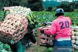 Petani Rejang Lebong kesulitan dapatkan pupuk bersubsidi