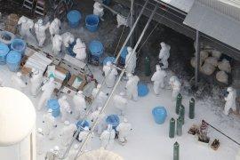 Swedia akan musnahkan 1,3 juta ayam adanya kasus flu burung