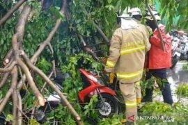 Enam motor tertimpa tiga pohon tumbang di depan Pusat Grosir Cililitan