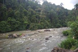 Akhir pekan, sejumlah tim arung jeram beraksi di Sungai Batang Merangin