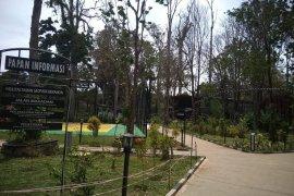 Pohon besar di bangunan Galeri Geopark Merangin meranggas terancam mati