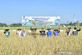 Desa Mandala, Telaga Langsat, dicanangkan sebagai desa agrowisata edukasi