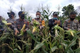 Polres Aceh Tengah panen 2 ton jagung, hasilnya dibagi ke masyarakat