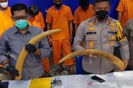 Pria warga Jambi ditangkap karena terlibat jual beli sepasang gading gajah