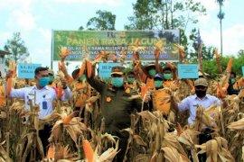 Pemkab Dairi apresiasi panen jagung oleh Rutan Sidikalang