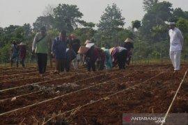 Dedi Mulyadi ajak petani dan pengurus masjid di Purwakarta gotong-royong tanam padi