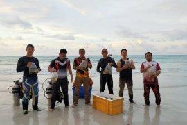 "Polres Bangka Barat tebar ""anemon"" di Pantai Jerangkat"