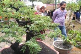 Pecinta bonsai di Kabupaten Penajam Paser Utara segera bentuk asosiasi