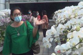 Ratusan jenis bunga anggrek hiasi agrowisata anggrek DOG di Denpasar